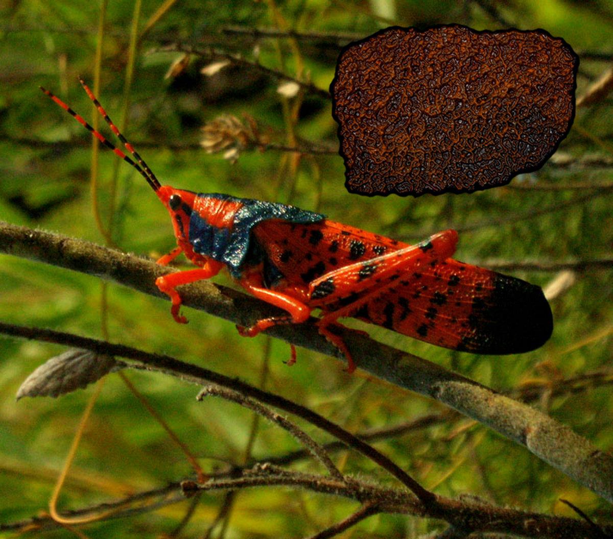 Carbonized Grasshopper noise | NECROTIC TISSUE vomit