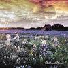 Bloom of Doom Cover Art