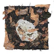 Phases 11: Birch (feat. Steven Kemner) cover art