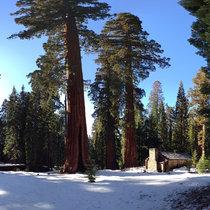 Sequoia Flute Meditation cover art