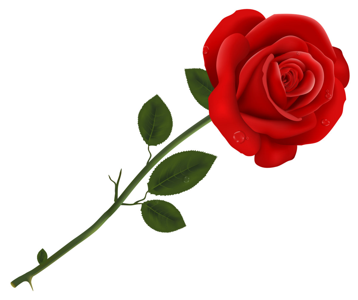 every rose has a thorn meaning