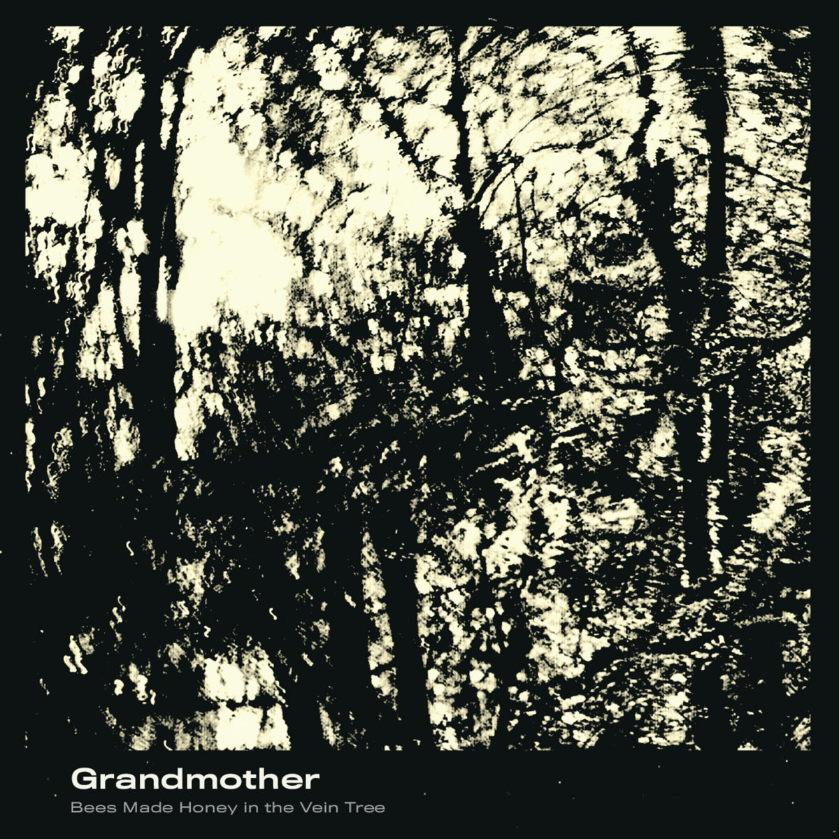 bees made honey in the vein tree - grandmother (2019)