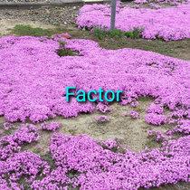 Factor cover art