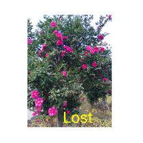 Michiru Aoyama「Lost」 cover art
