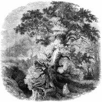 The Grove Tetralogy cover art
