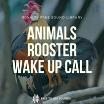 Rooster Sounds Cock A Doodle Doo Wake Up Call cover art