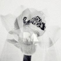 Rancor cover art