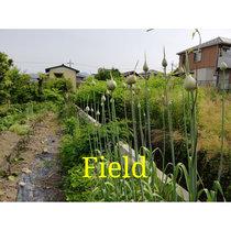Field cover art
