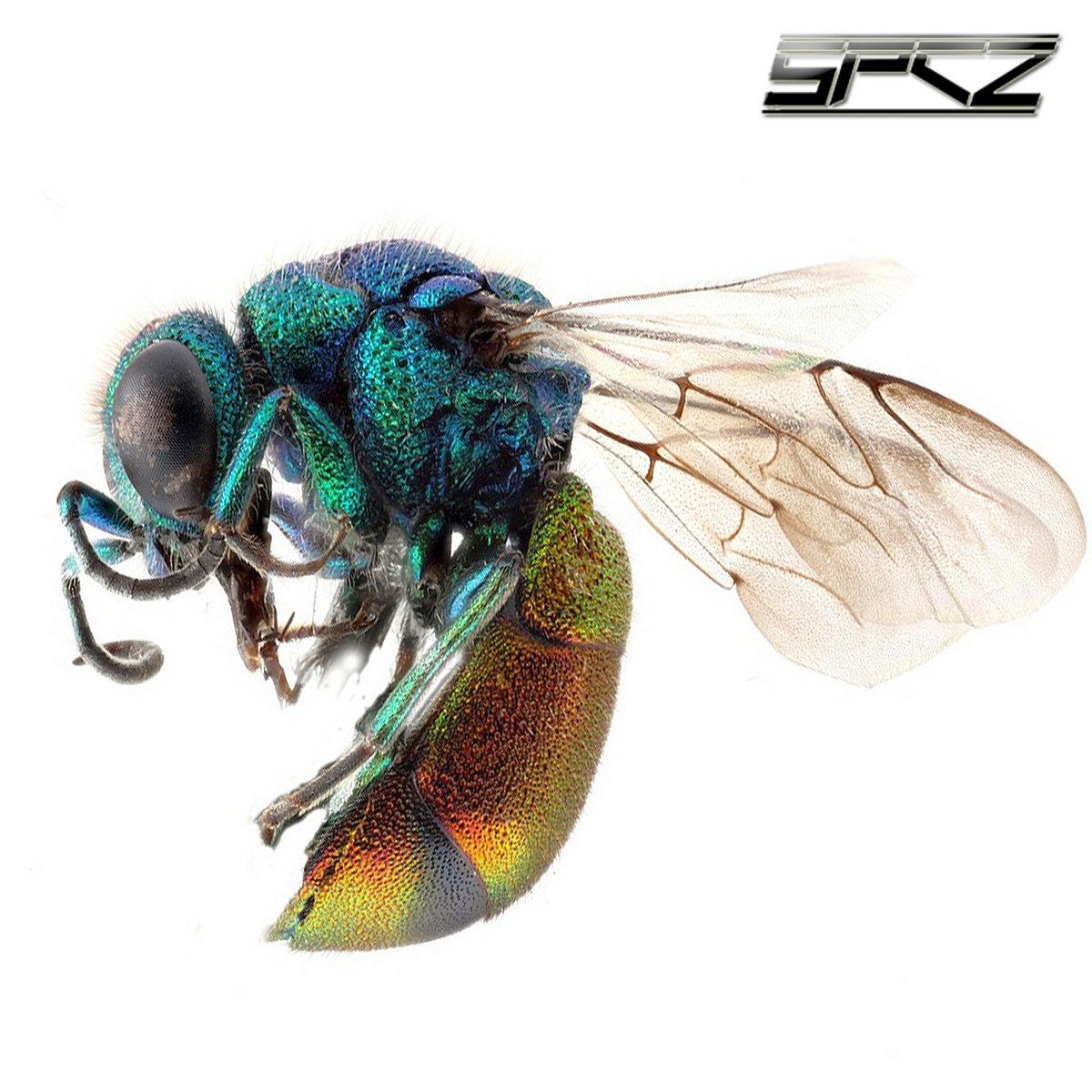SPCZ - Vespiade