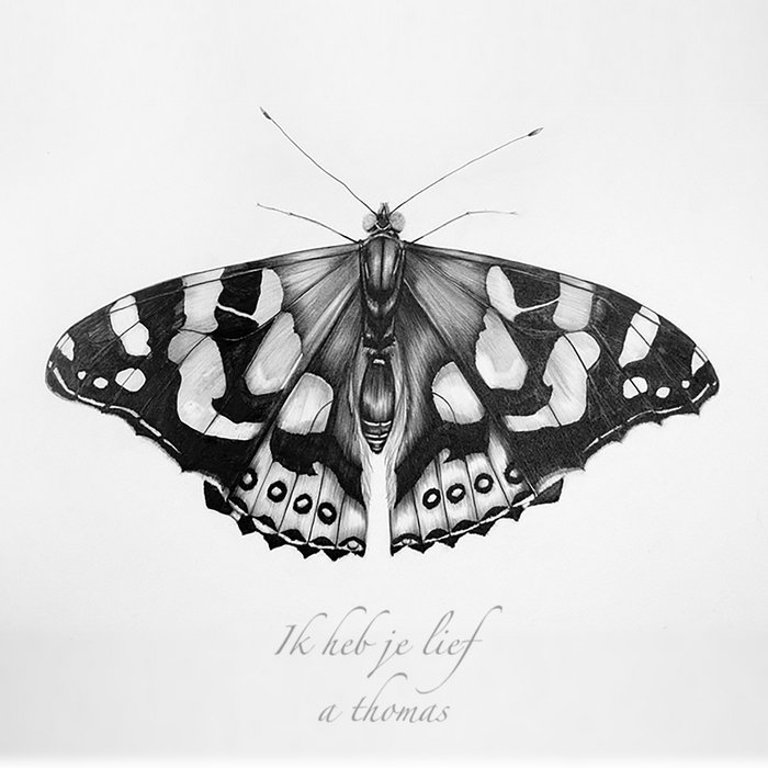 vanessa butterfly drawing images - 736×600