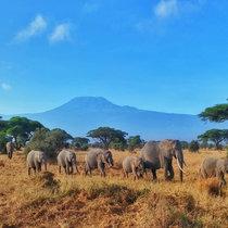 IMAGE Kilimanjaro Elephants cover art