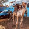 Arat Kilo - Ambush in Cairo (AkizzBeatzz Edit)