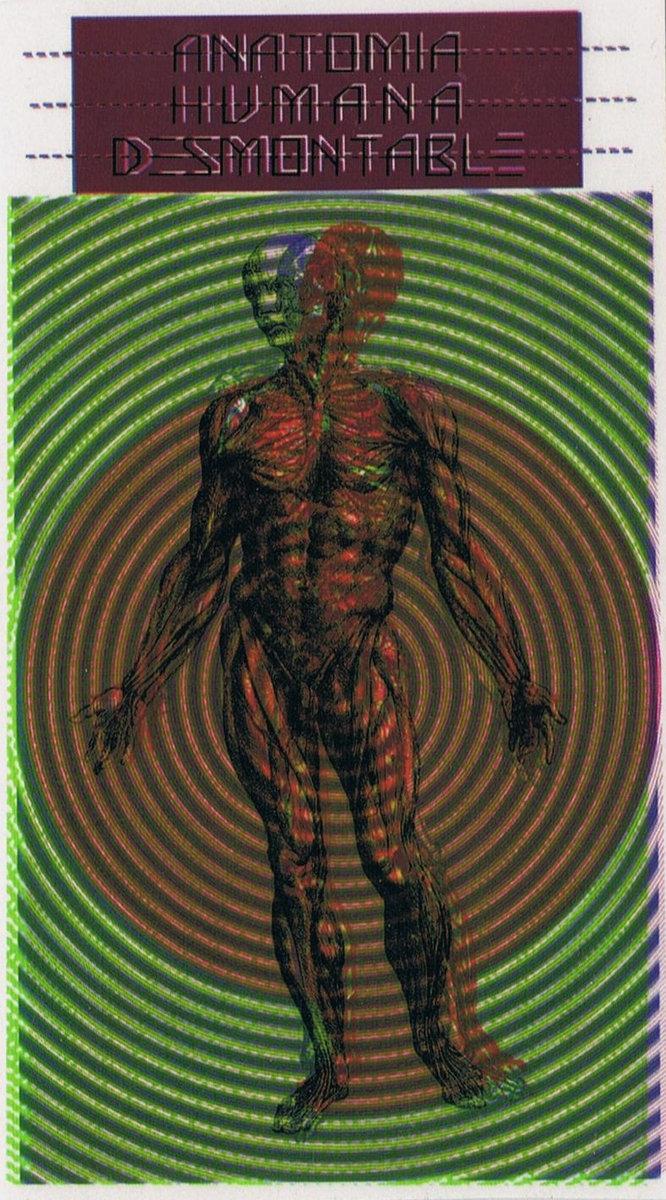 DESORDEN | Anatomia Humana Desmontable