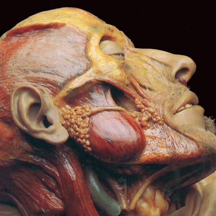 Cadaver anatomy pictures
