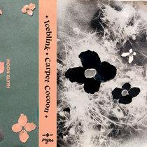 Carpet Cocoon cover art