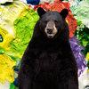 Bear Care Cover Art