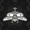 Canciones para Insectos Cover Art