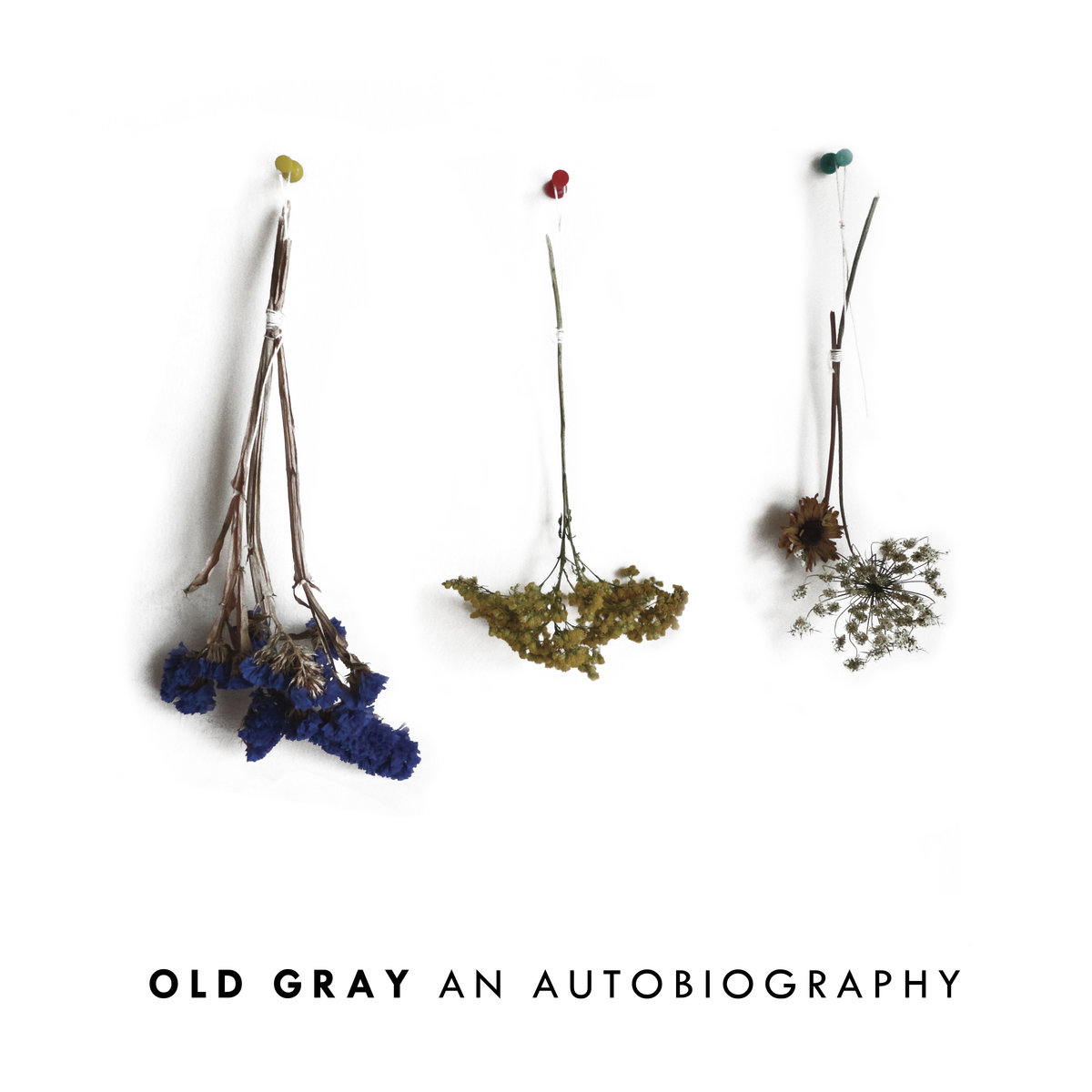 The Artist   Old Gray