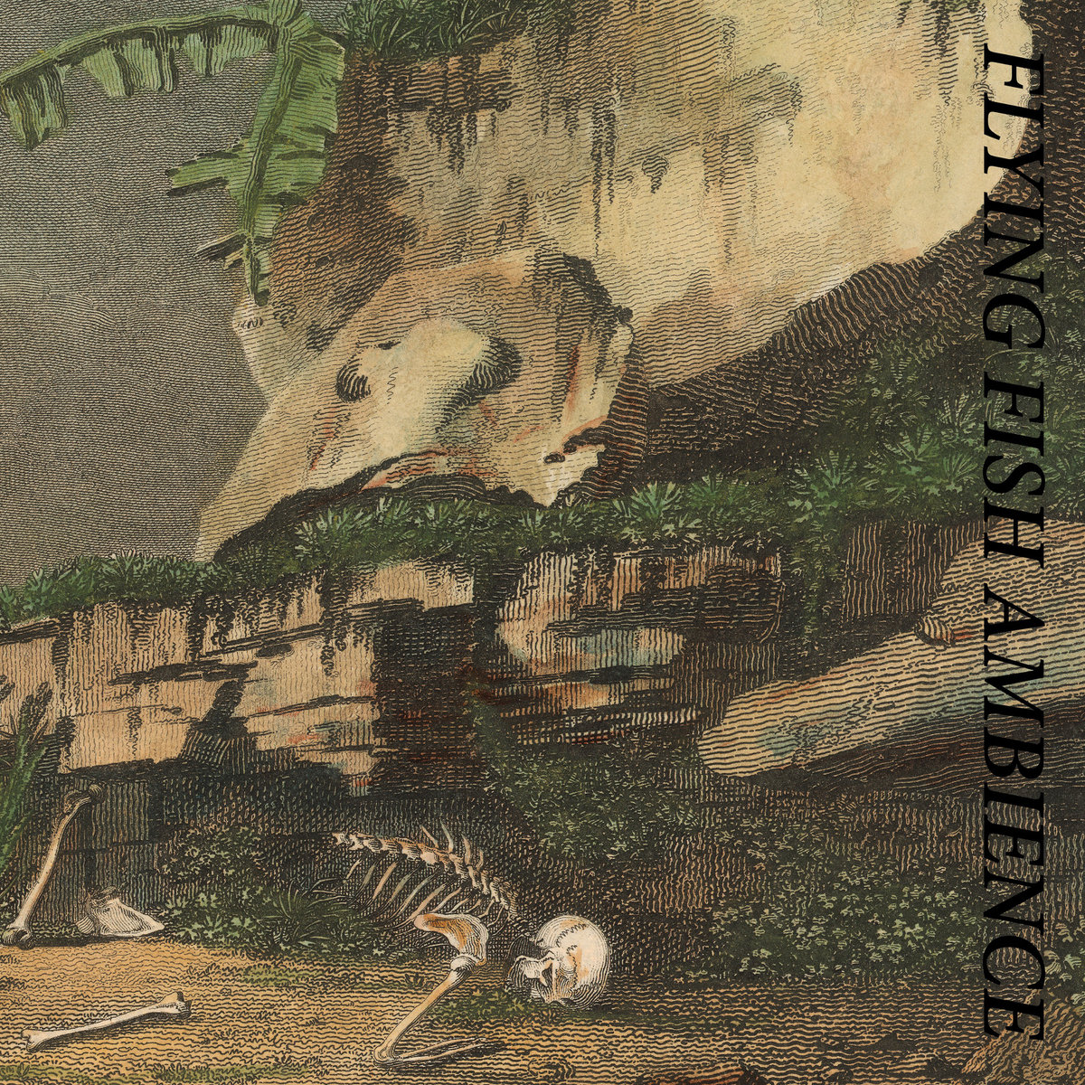 Flying Fish Ambience, by Rainforest Spiritual Enslavement