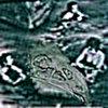 Kcarl'sAboard Cover Art
