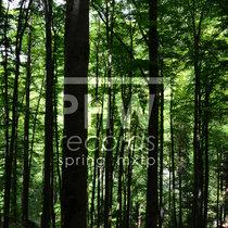 Spring MXTP cover art