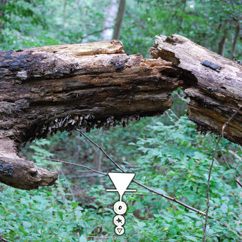 Phyllomedusa - Tonk Camor Strain The Ceiquic Anuran Thousand