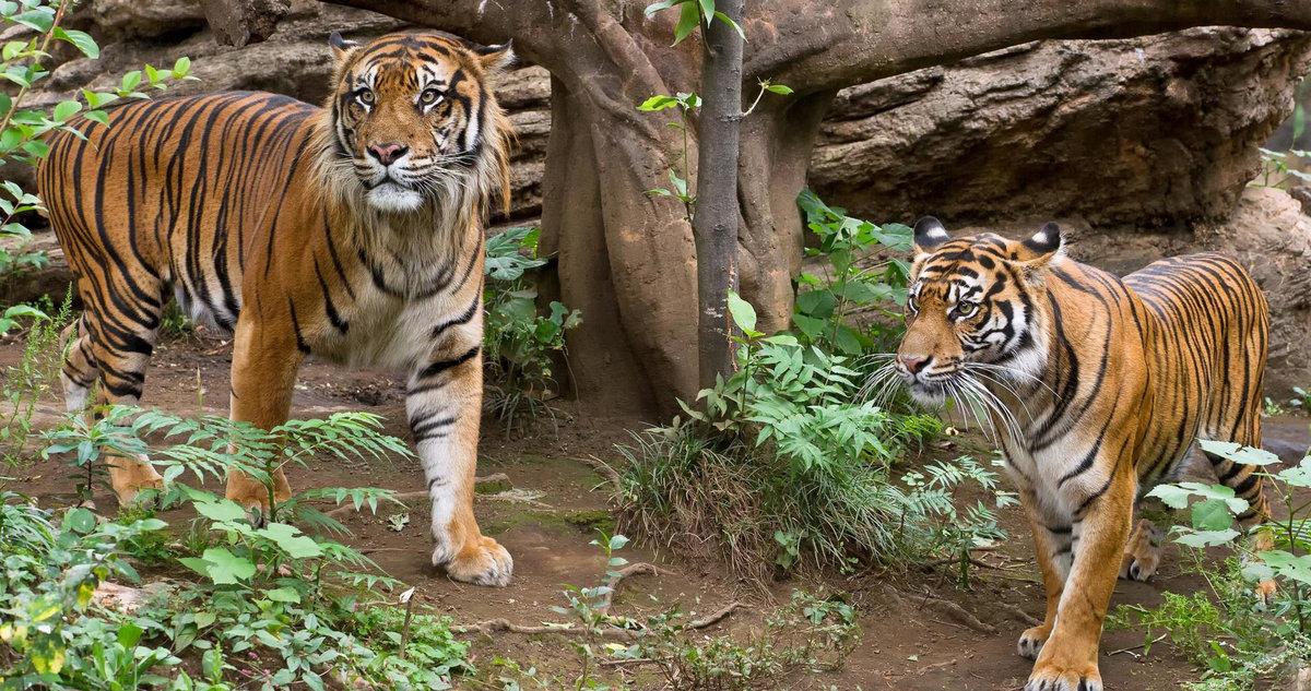 Tiger zinda hai 2017 full hindi movie free download | download in.