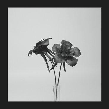Dark Lotus main photo