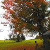 autumn lev Cover Art
