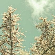Michiru Aoyama「Warm season」 cover art