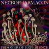 Prisoner of Experience Cover Art