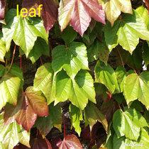 Michiru Aoyama「Leaf」 cover art