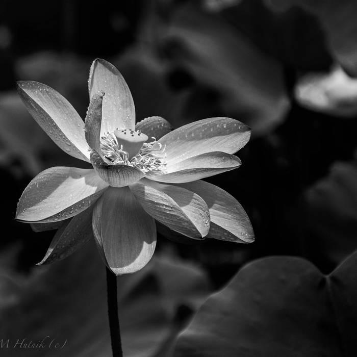Download Mr.K - White Lotus / Titan mp3