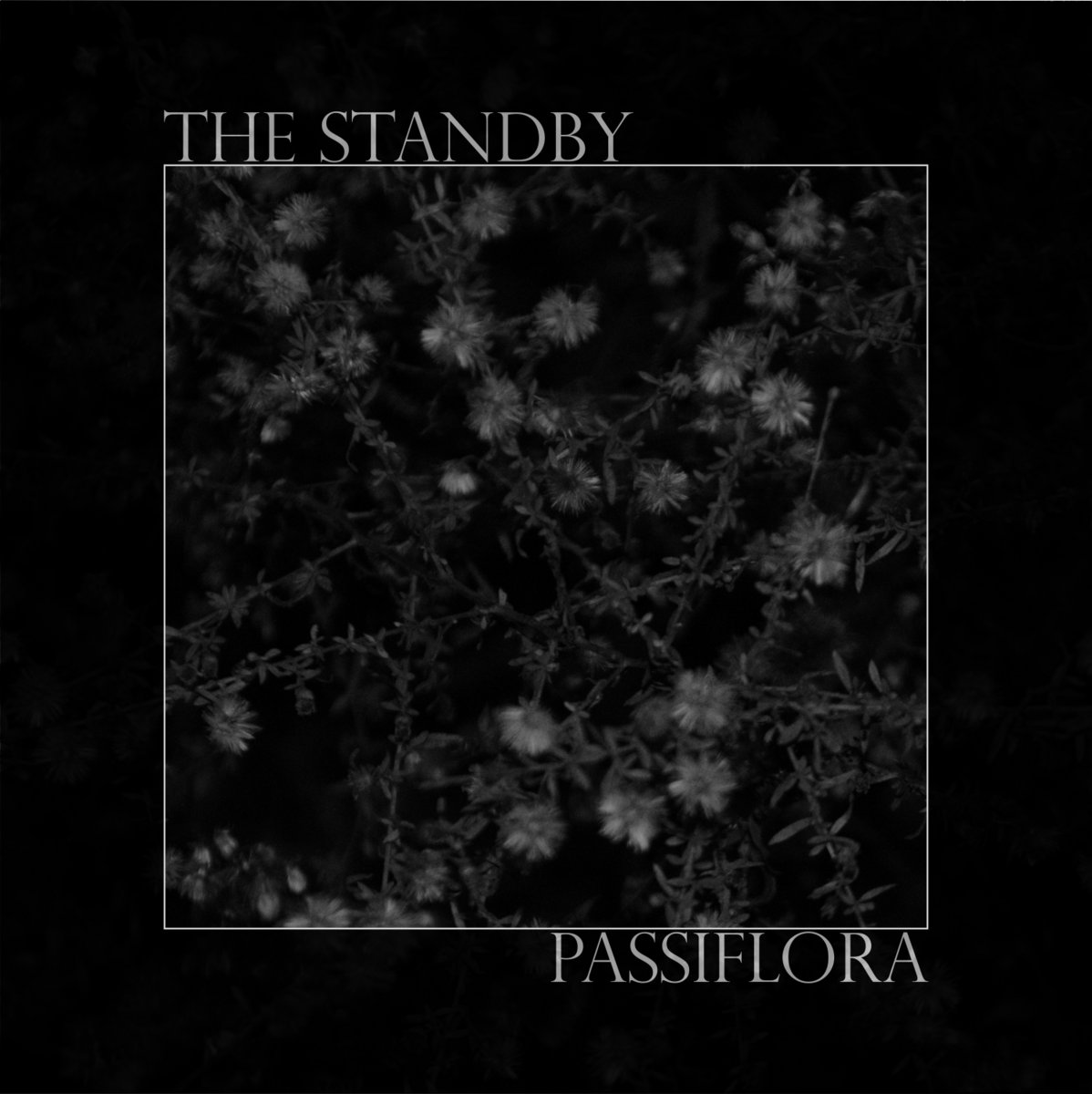 Passiflora the standby by the standby altavistaventures Gallery