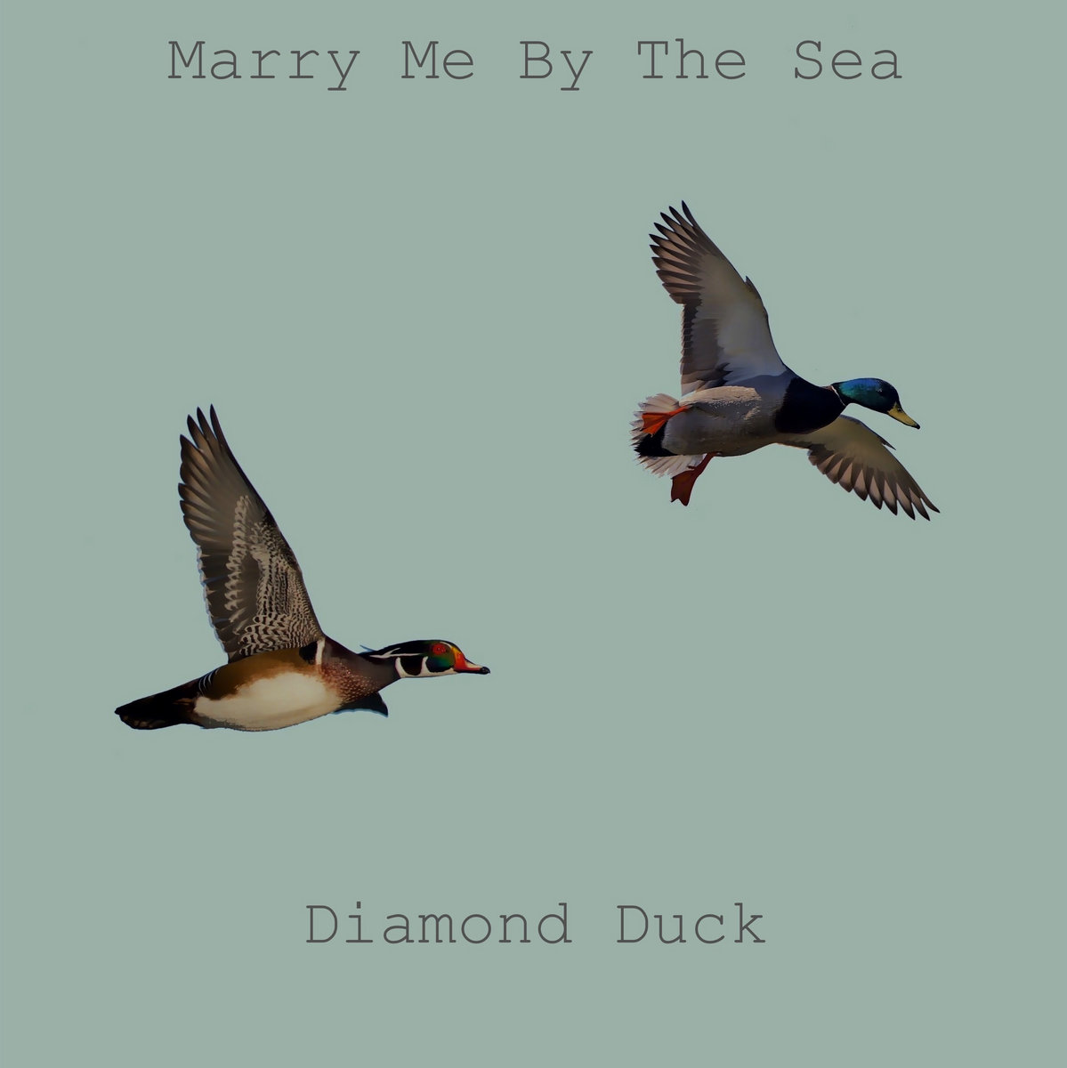 marry me by the sea diamond duck