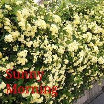 Sunny Morning cover art