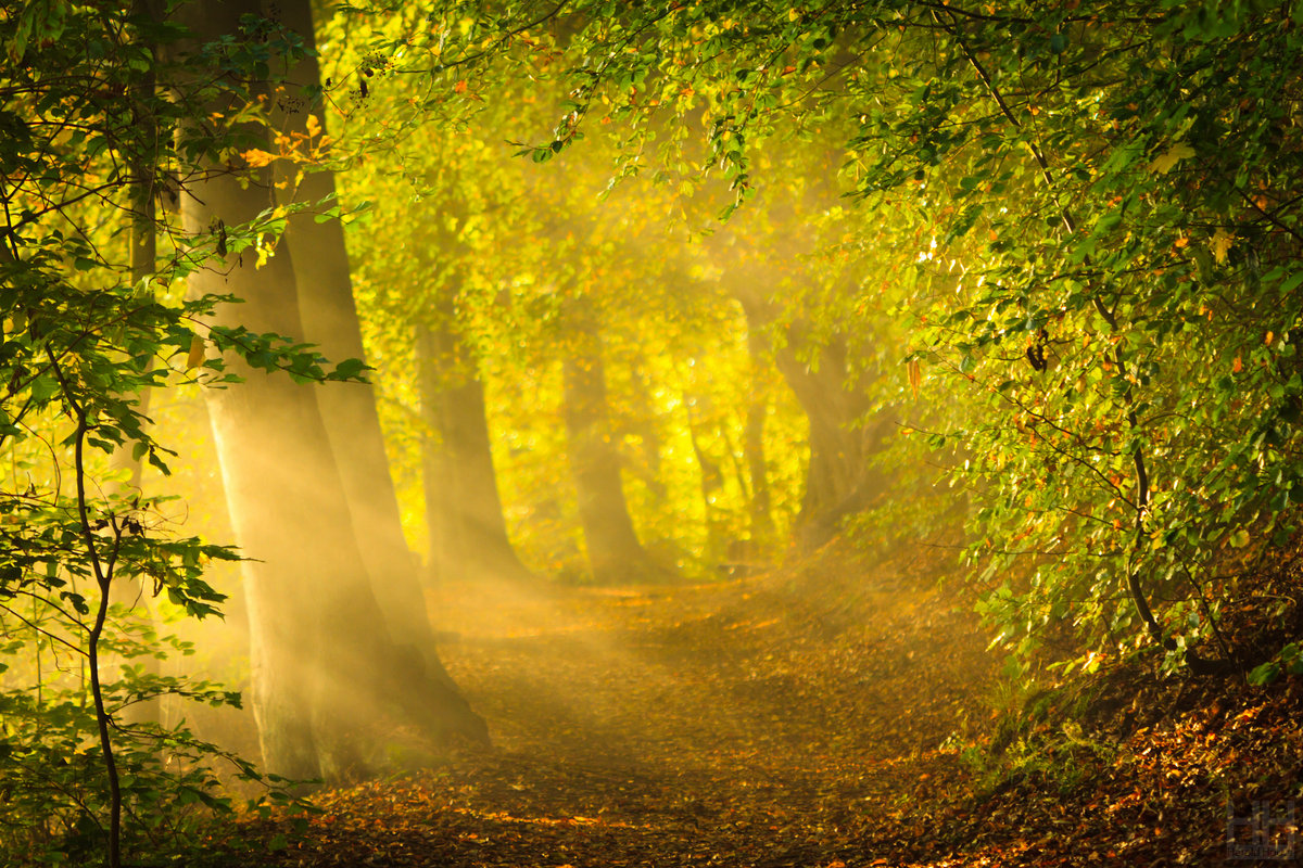 Forest Sounds with Relaxation Music   Acerting Art