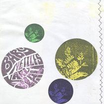 Baby Nettles cover art