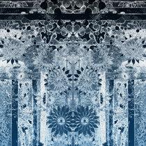 Coprinellus Disseminatus cover art