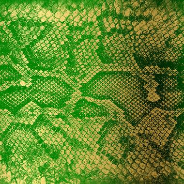 Money Green Viper [HNR40] main photo