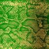 Money Green Viper [HNR40] Cover Art
