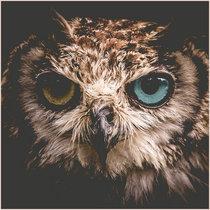 Awake EP cover art