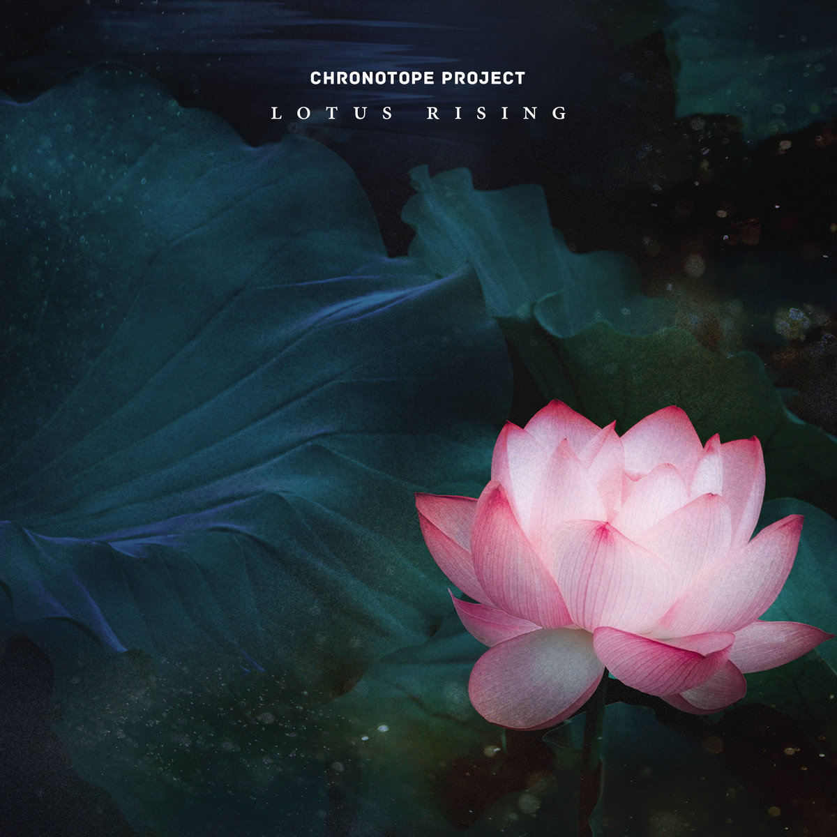 Lotus Rising Spotted Peccary Music Progressive Ambient Electronic