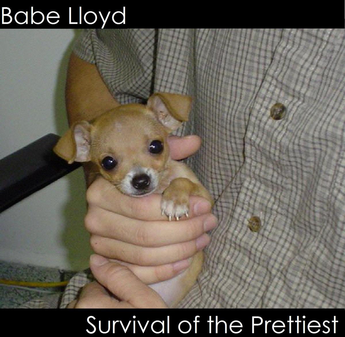 Animal Babe Porn porn shop regular | babe lloyd