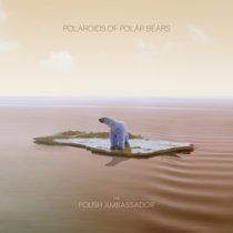Polaroids of Polar Bears cover art