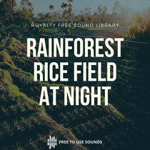 Rainforest Rice Field Ambience At Night Bali, Indonesia Soundscape cover art