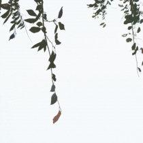 霧が晴れたら cover art