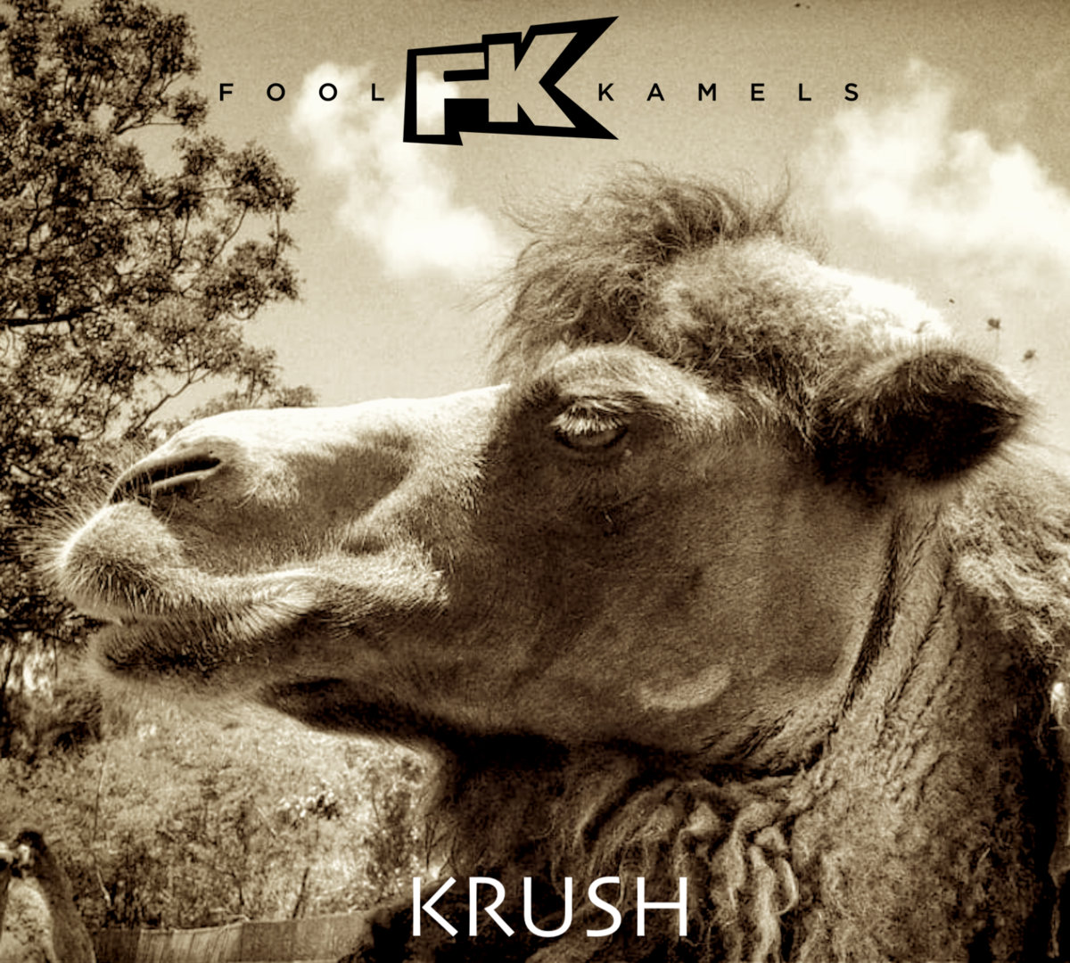 KRUSH by Fool Kamels