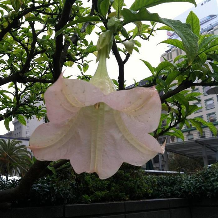 Lotus Flower Bomb Freestyle Carlo Huggie B Gambino